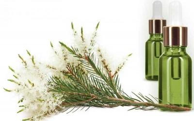 Τεϊόδενδρο (Tea Tree Oil) - Μέρος Α' 5