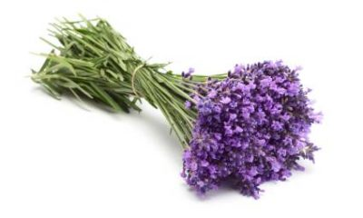 lavandula-angustifolia-officinalis-2