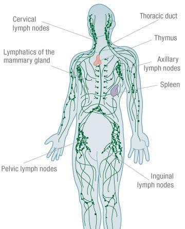 lemfiko-susthma-leitourgia-tou-1