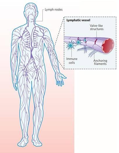 lemfiko-susthma-leitourgia-tou-5