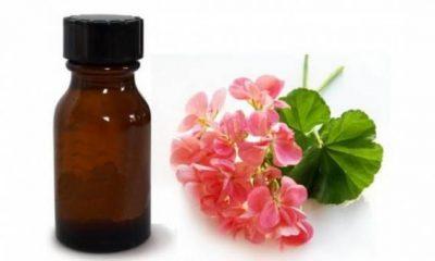 geranium-oil-flower