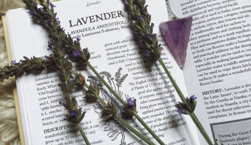 lavandula-angustifolia-officinalis-3
