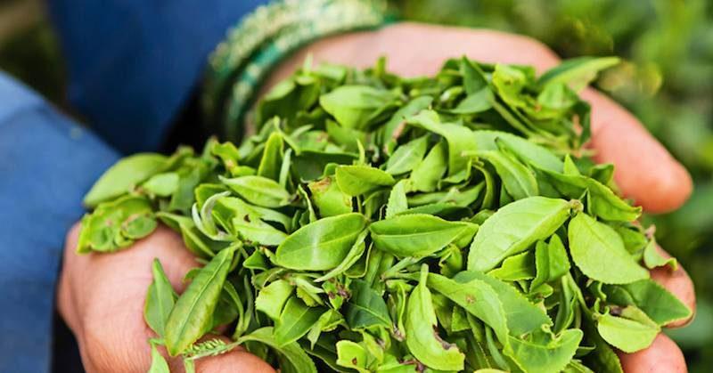 tea-tree-fulla