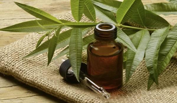 tea-tree-oil-d
