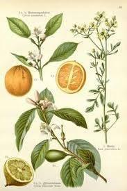 citrus-paradise