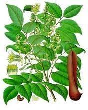 myroxylon-balsamum