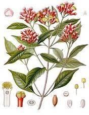 syzygium-aromaticum