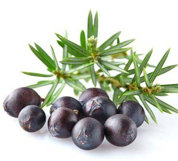 Juniper-Berry1-600x545