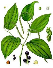 220px-Piper_nigrum_-_Köhler–s_Medizinal-Pflanzen-107